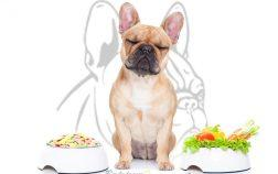 bouledogue alimentation