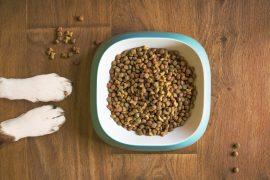 Allergie alimentaire chien